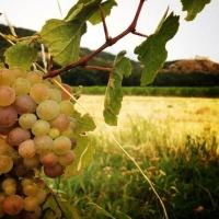 Teambuilding na jižní Moravě - teambuilding plný slunce a vína