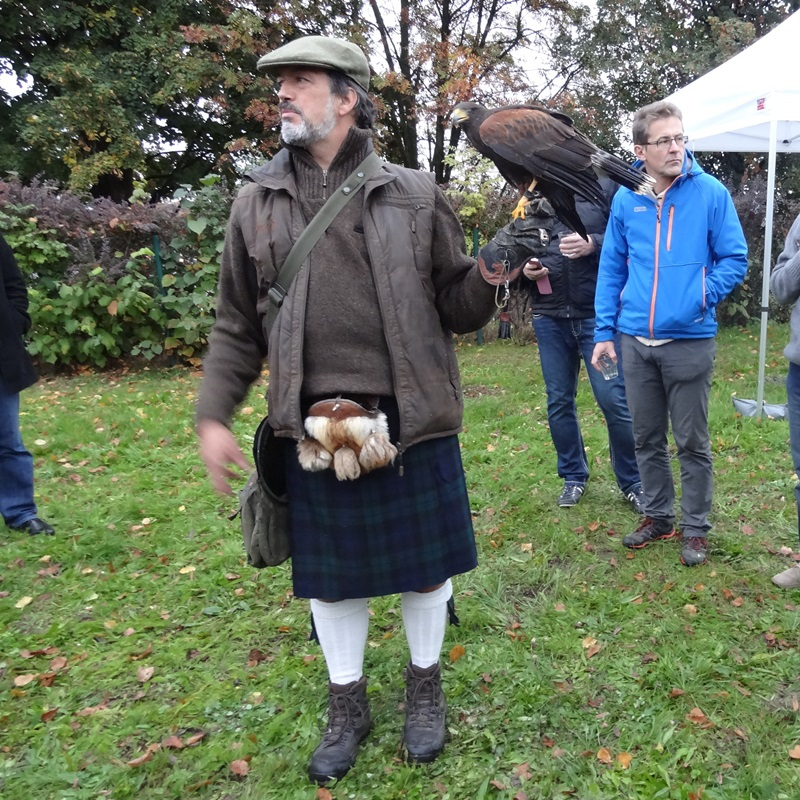 Highland games - demonstrations of falconry