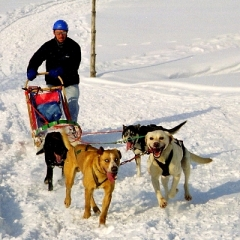 zimní teambuilding a firemní akce - psí spřežení Krkonoše