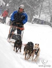 Zimní teambuildingová aktivita - psí spřežení