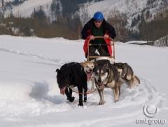 Teambuilding - psí spřežení